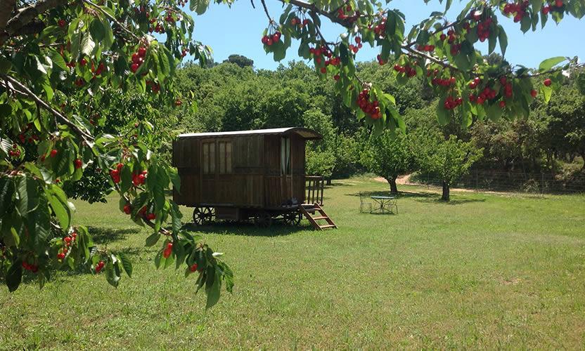 Chambre d 39 h tes cabane secret 39 s au barroux avignon et provence - Cabane jardin gerra avignon ...