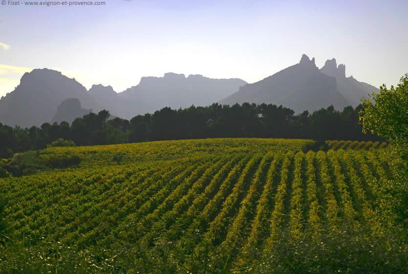 the dentelles de montmirail surrounded by vineyards