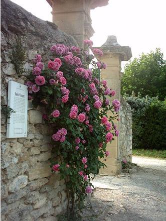 the old rose circuit in grignan avignon et provence. Black Bedroom Furniture Sets. Home Design Ideas