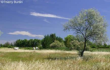Paysages de camargue avignon et provence for Sites paysages