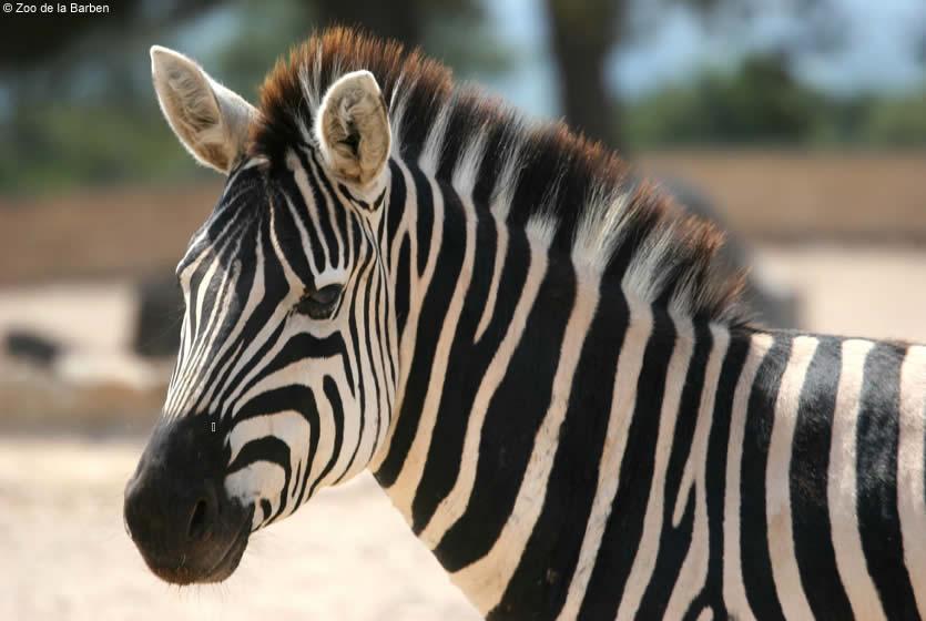 zoo vaucluse gard