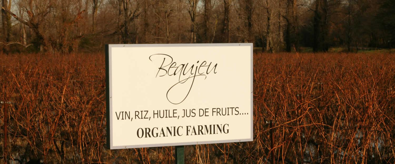 Domaine viticole domaine de beaujeu arles avignon et - Chambre agriculture avignon ...