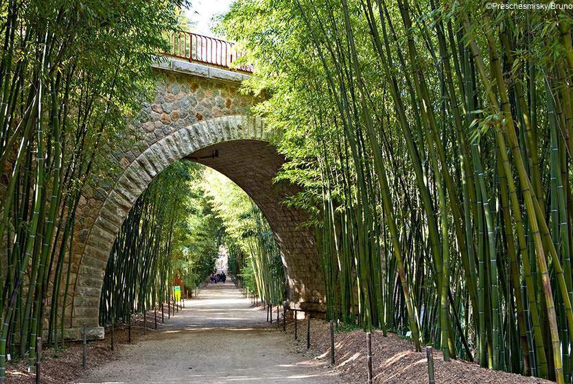 The Bamboo Plantation of the Cévennes   Avignon et Provence